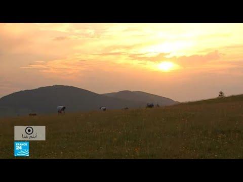 أزهار العطاس بإقليم -لي فوج- في شرق فرنسا.. كنز من الذهب في قلب محمية طبيعية  - 14:58-2020 / 7 / 31