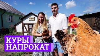 Бизнес на прокате куриц | E1.RU