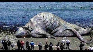 Рыбак от страха врезал дуба, когда это чудовище вынырнуло из воды. Что реально таит мировой океан.