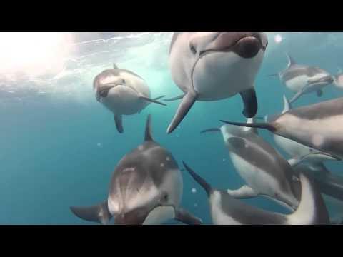 Как дышат дельфины