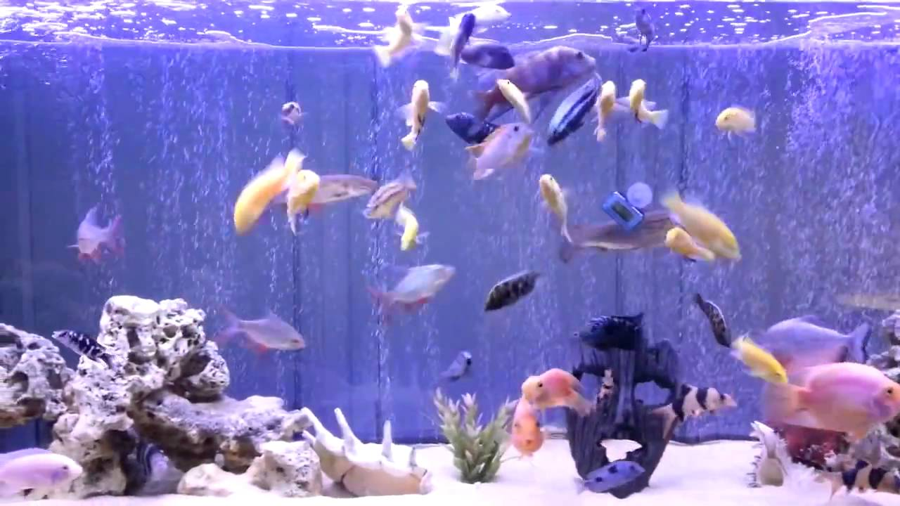 air curtain bubble wall fish tank nanyoovents youtube. Black Bedroom Furniture Sets. Home Design Ideas