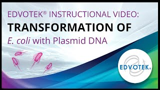 Transformation of E. coli with Plasmid DNA - Edvotek Video Tutorial