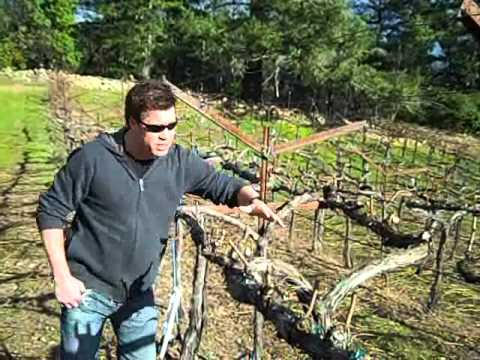 Growing Grapes at a High Elevation
