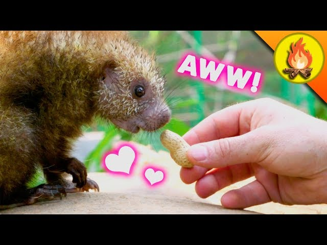 Cutest Animals EVER?!