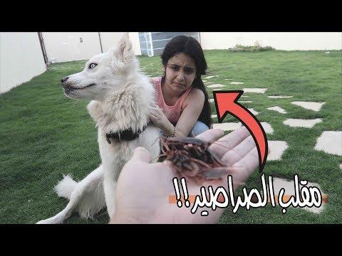 مقلب الصراصير في لانا - لايفوتك شصار 🕷!!!