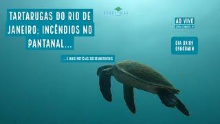 Tartarugas marinhas do RJ; Incêndios no Pantanal e mais Notícias socioambientais - VERDE MAR #64