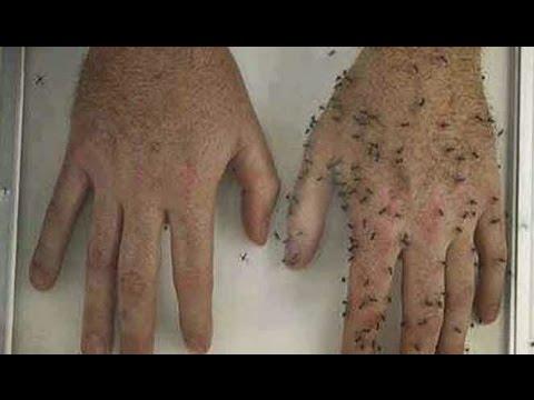 cara-membuat-obat-anti-nyamuk-dengan-bahan-alami