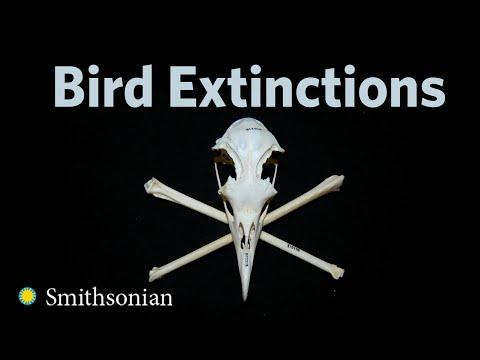 Bird Extinctions with Helen James