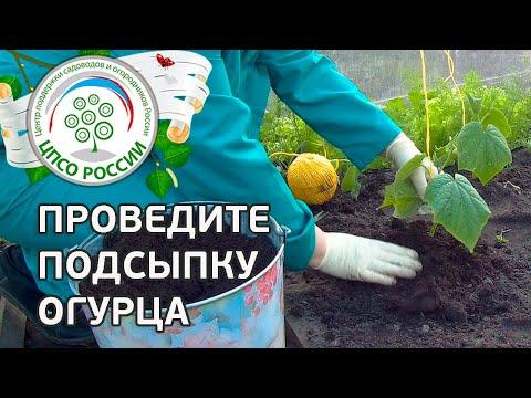 ЗАВОД ГОТОВЫХ ТЕПЛИЦ в Москве, купить теплицу из