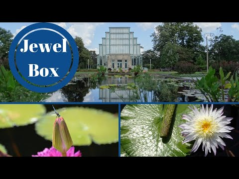 The Jewel Box - St Louis' Forest Park Series