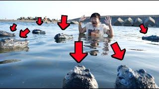 泳いでたら大量のワニに襲われる後輩wwwwwwww