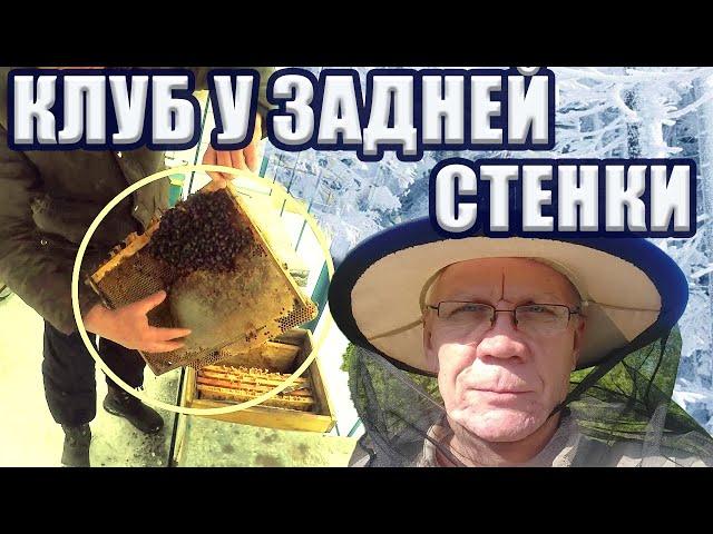 Зимняя ревизия пчел 2019 году Спасать пчел или нет