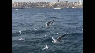 İstanbul ve martılar