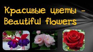Энциклопедия цветов. Самые красивые цветы. Часть 1 .The most beautiful flowers