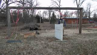 One Meter Hurdle Jump Dog Training: Deedee