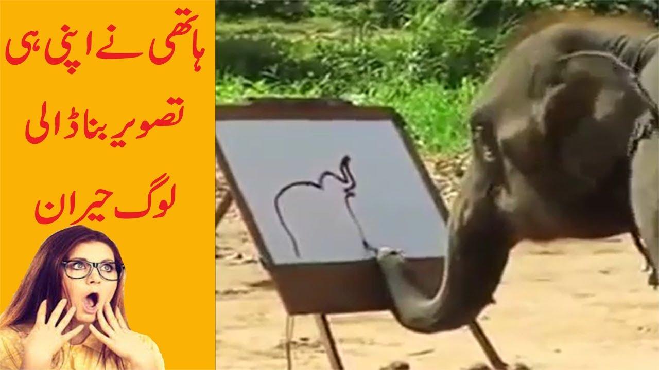 Watch Amazing Animal Video: Elephant Painting video