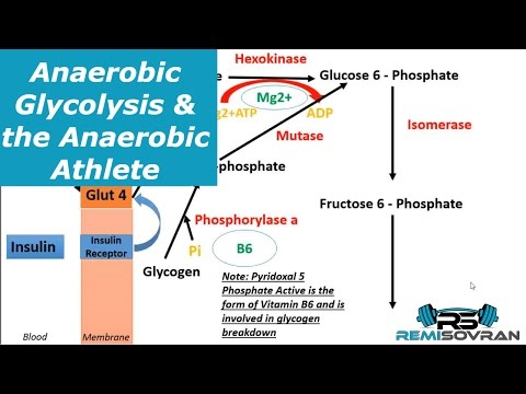 Anaerobic Glycolysis & the Anaerobic Athlete | Sports Nutrition | Exercise Physiology