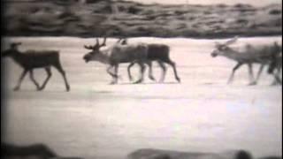 Животный мир американского севера