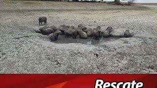 Salvaron 2 mil animales del desierto de Paz de Ariporo, Casanare