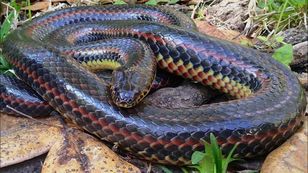 Rainbow Snake Spotted in a Florida County for the First Time Since ...