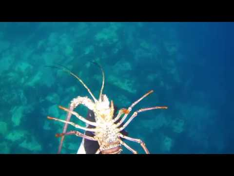 Chasse sous marine Martinique 3 Deeper Blue