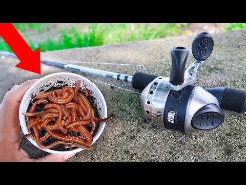 Fishing With GIANT Livebait WORMS (WALMART)