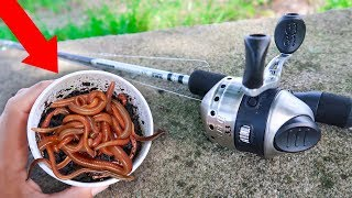 Fishing With GIANT Livebait WORMS (WALMART)