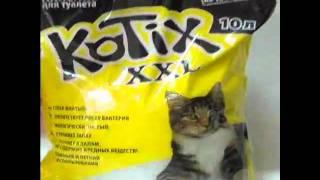 Наполнитель для кошачьих туалетов Kotix (Котикс) - 10 л.