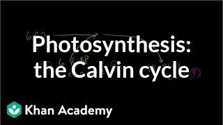 Photosynthesis:  Calvin Cycle