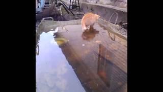 котенок ходит по воде