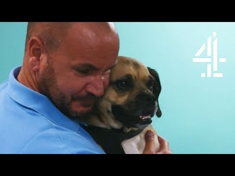 Heartwarming Moment When Dog is Reunited with Family After Bus Accident | The Supervet