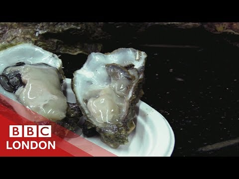 Reviving London's Oyster Population - BBC London