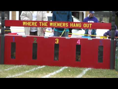 Oktoberfest Wiener Dog Races.mpg