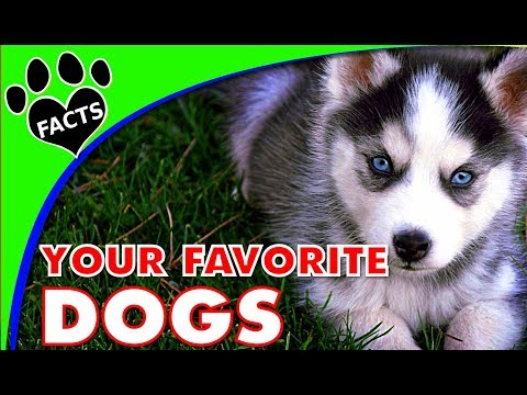 Your Favorite Dog Breeds Happy New Year! - Animal Facts