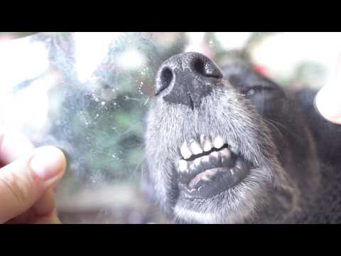 Useful dog tricks and fun by Nova // Novos triukai