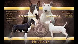 India As-w - Bull Terrier