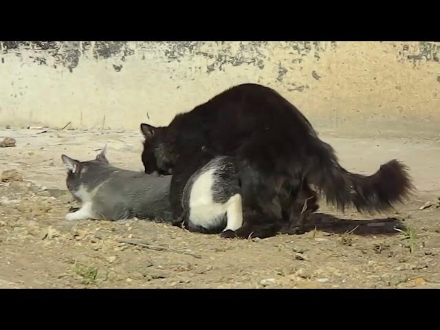 Katzen Paarung geschlossen Paarung Katze