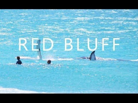 Red Bluff 2 Surf FILM // Adventure