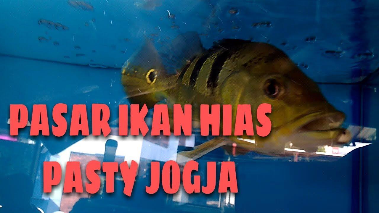 Unduh 88 Gambar Ikan Hias Hd HD Terbaik