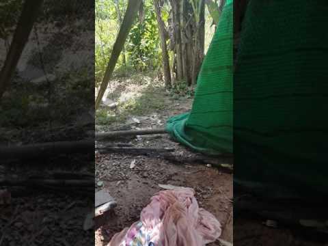 CMMG .22LR VS งูเห่า