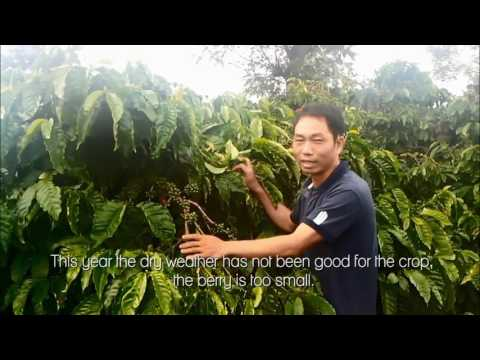 Coffee Farmer Vietnam