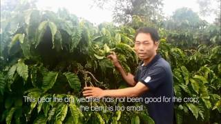 Coffee Farmer Vietnam