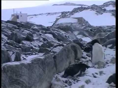 Antarctica A Year on Ice