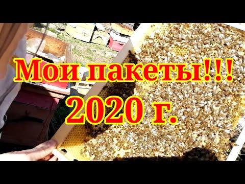 Мои пакеты 2020 г. Первый опыт покупки пчел. Хорошо или плохо судить Вам!?