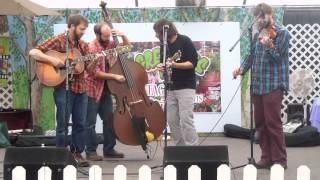 'AKA Laser Bunny Bluegrass Band' LIVE In Concert At 'Tagawa Gardens'