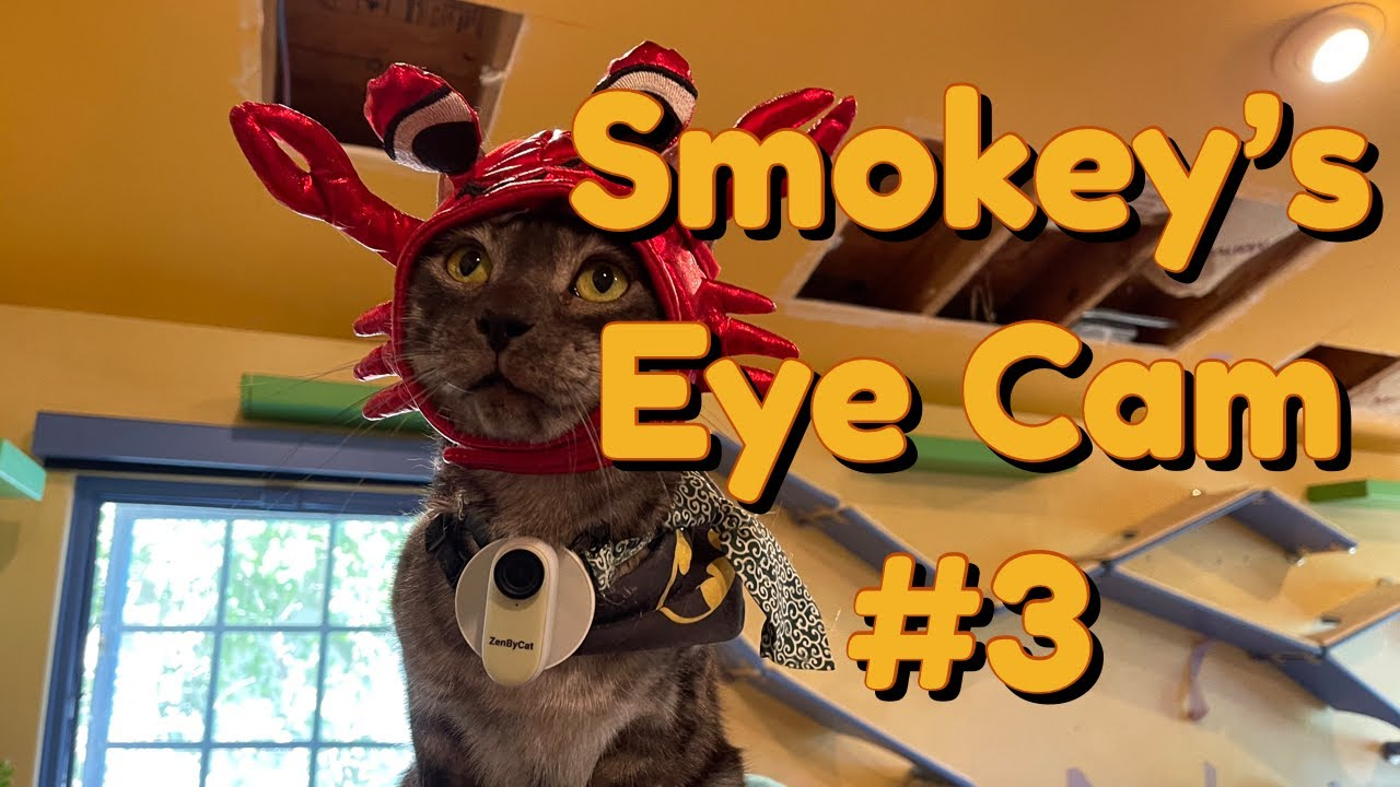 [House Of Nekko] Smokey's Eye Cam #3