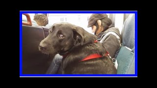 | Dog Rescue StoriesSeattle Dog Rides The Bus To The Dog Park All By Herself