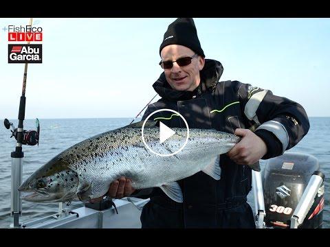 HD version Livefiske med Petter Larsson - Vi trollar lax på Vänern