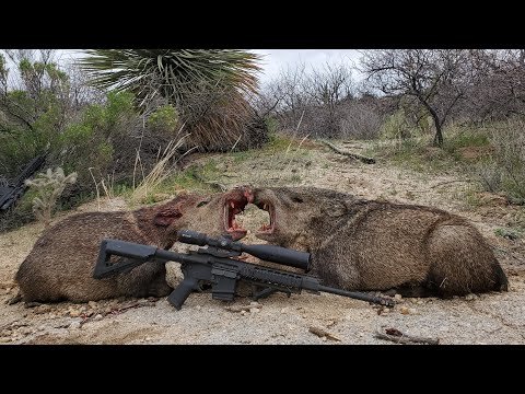 Arizona Javelina Hunt 2020 ( General Tag)