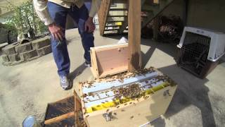 Packaged Bees Observation Hive Annett Nature Center Warren County Conservation Board
